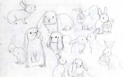 Bunny Studies